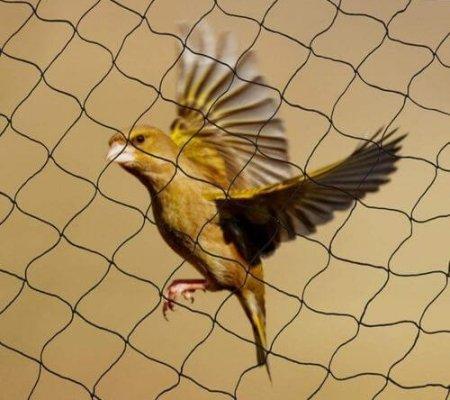 anti-bird-net-500x500